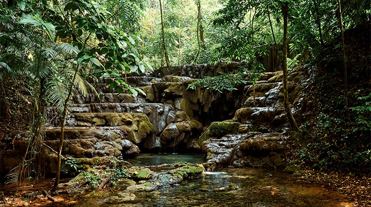 La jungle de Palenque